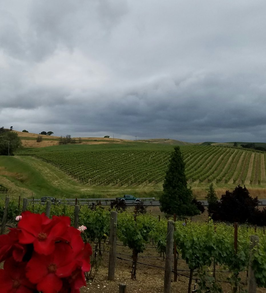 The view from the patio at Domaine Carneros