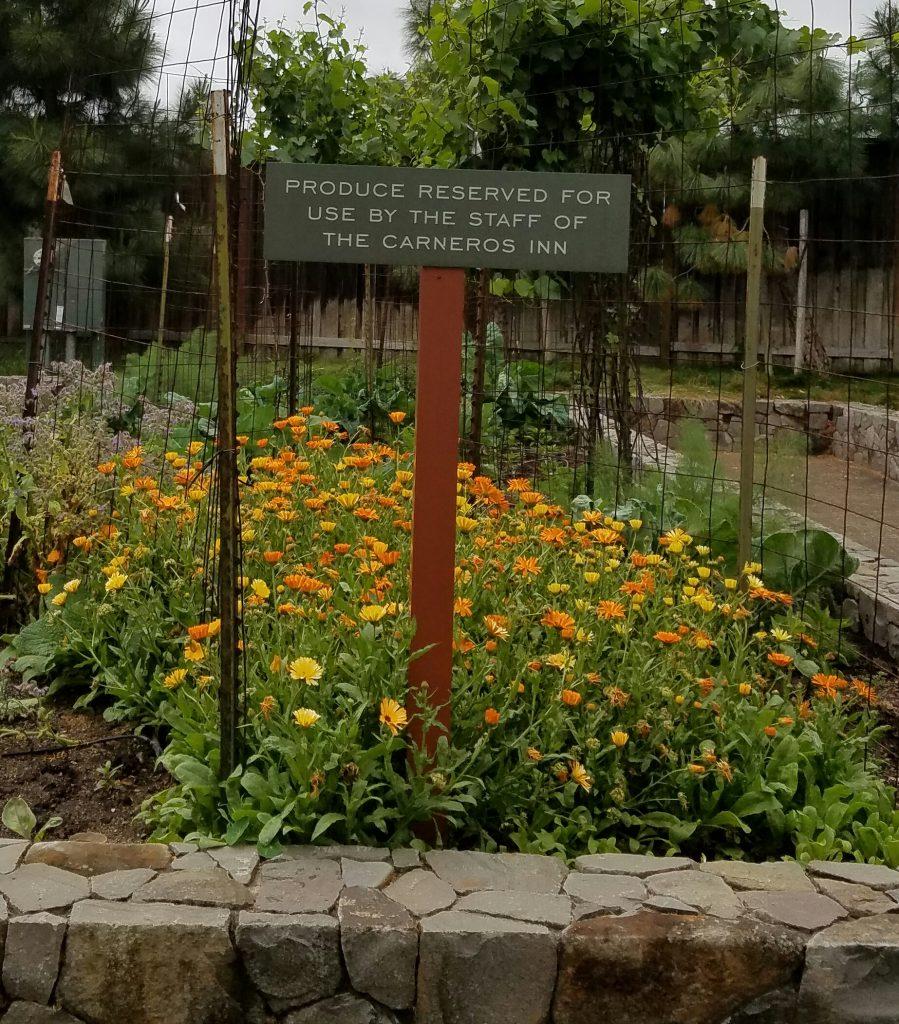 The kitchen garden at the Carneros Inn